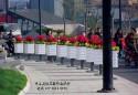 安徽合肥环城南路隔离桩变花箱护栏 既防止违规停放还美化环境!