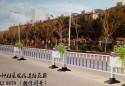 浙江义乌3000米道路隔离花箱项目