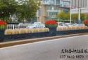 汕头市市城绿中心组织人力物力对道路花箱护栏鲜花进行更换!