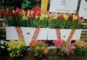扮靓街头的花箱护栏内花草被偷走 市民呼吁手下留情 把美丽留住!